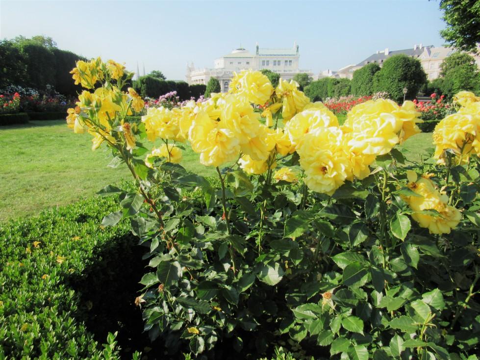 flowersvienna.jpg